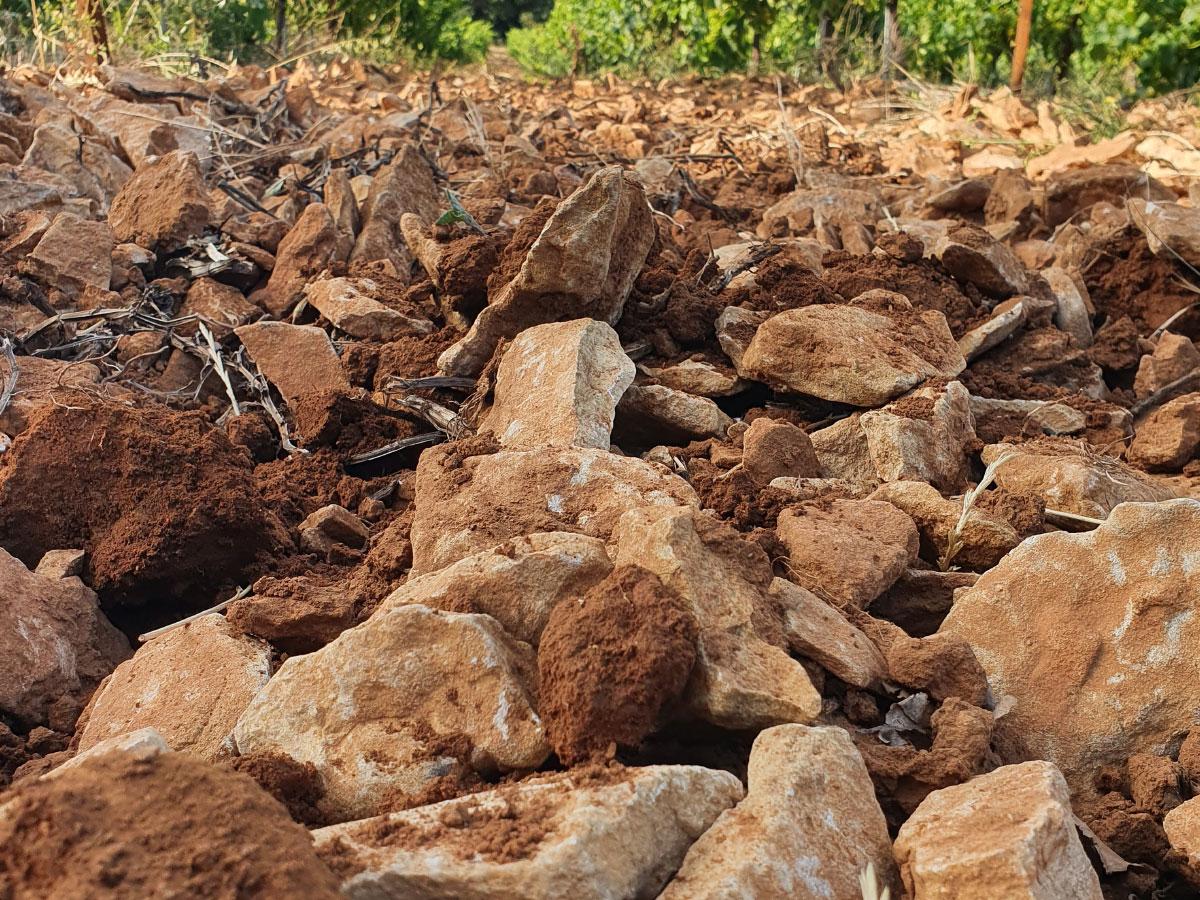 Vin de Rasteau, un terroir incomparable