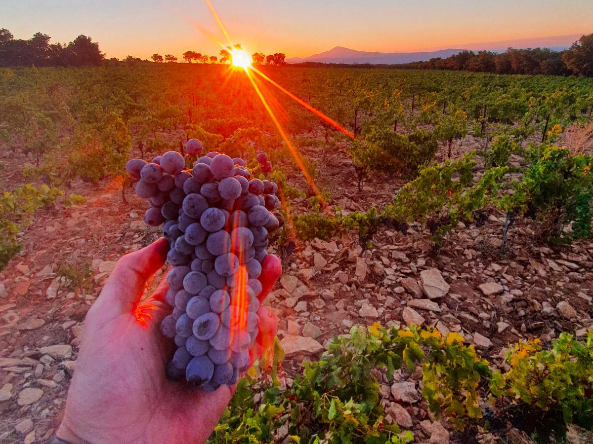 vin de Rasteau en biodynamie